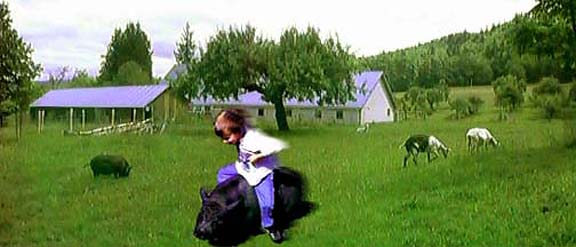 Erik's Pig Ride in the Back Meadow